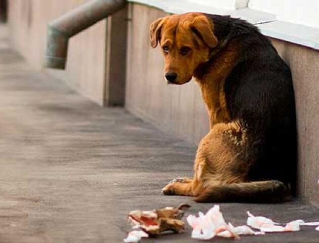 Луцькі студенти зробили 19 будок для безпритульних собак