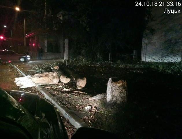 У Луцьку від вітру впало дерево. ФОТО