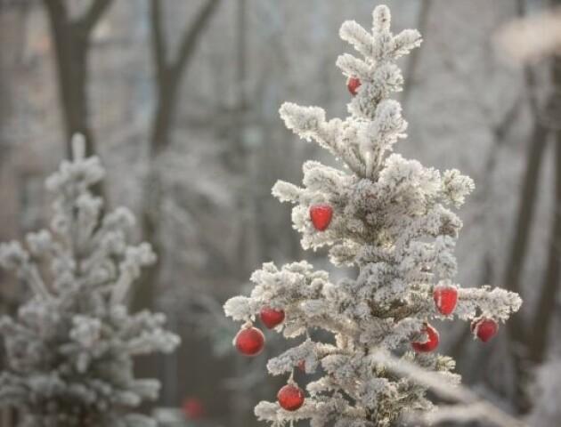 «Дощі - не виключені». Синоптики розповіли, якою буде погода на Новий рік