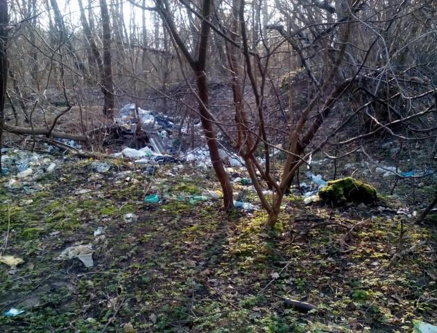 «Нема жодного клаптика без сміття», - лучанка про ліс у селі Дачне
