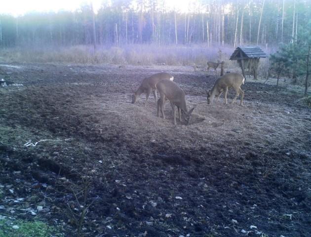 У волинському лісгоспі встановили відеокамери біля годівничок для звірів. ФОТО