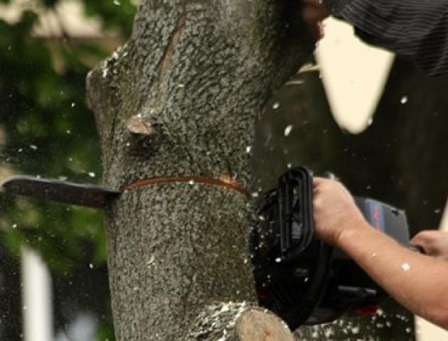 У Луцьку через ремонт тротуарів зрізатимуть дерева