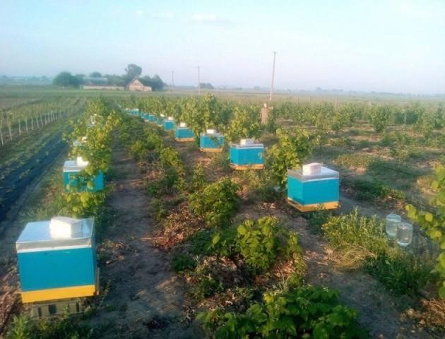 «Стан контрольований», – посадовець про підмор бджіл на Волині