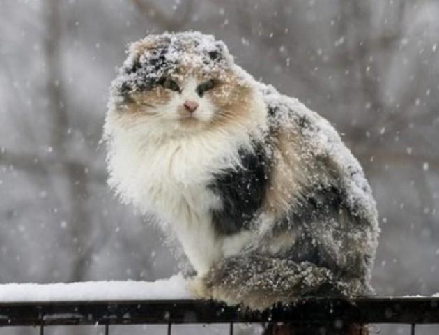 Сніг і мороз: якою буде погода у Луцьку 27 березня