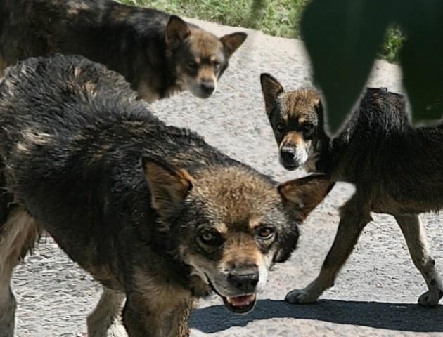 У Ковелі на жінку напала зграя собак