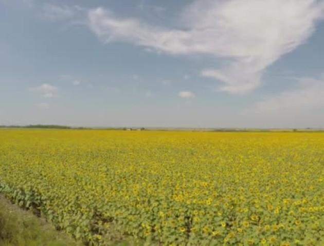 На Волині фермер повернув державі незаконно захоплені 18 гектарів землі