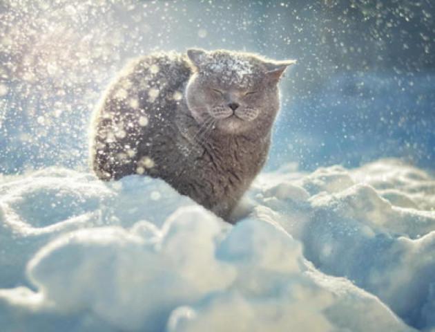 Сніг і мороз: погода у Луцьку на 16 січня