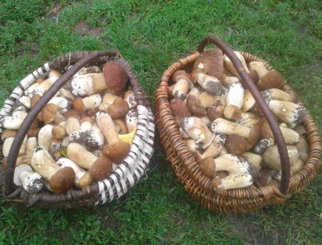 Волиняни хизуються кошиками зібраних грибів. ФОТО