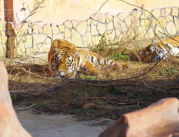 Луцький зоопарк запрошує на гостину