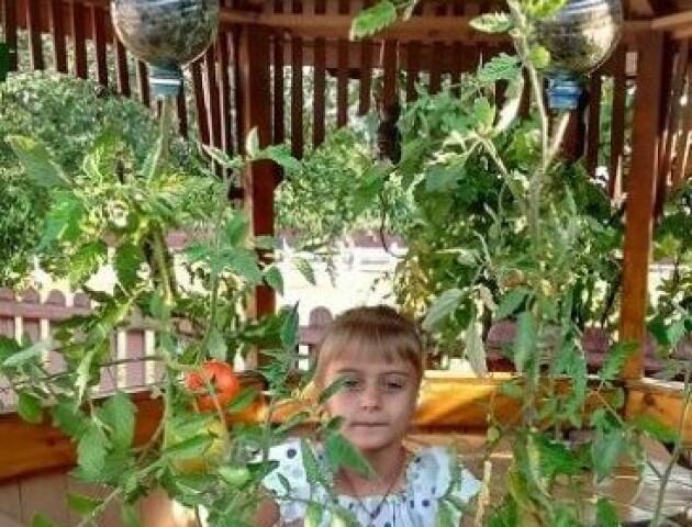Волинянка вирощує помідори оригінальним способом – коронем догори