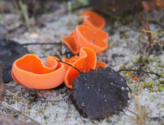 Волинянин натрапив у лісі на незвичайні гриби. ФОТО
