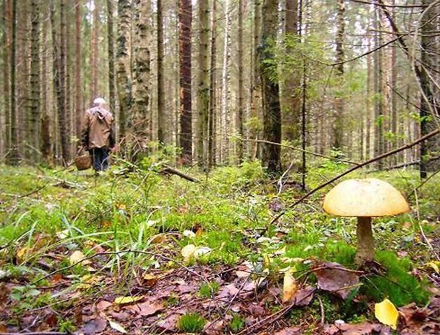 У лісі на Волині заблукали пенсіонерка та її внук