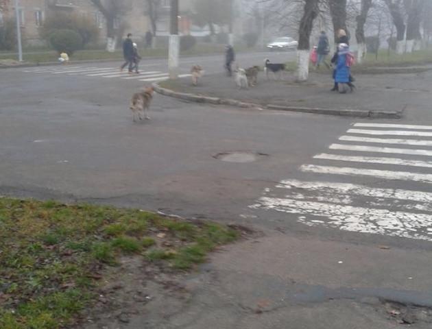Волинянка нарікає на собак, які нападають просто на вулиці