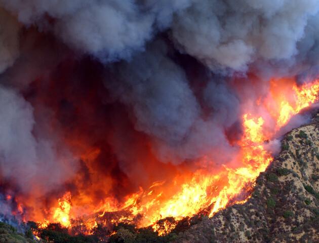 «До зими вигорить уся країна». З початку року пожежі знищили 18 тисяч гектарів лісів і полів