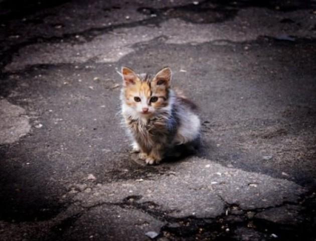 Скільки безпритульних тварин живе на вулицях Луцька