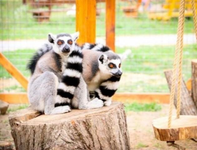Луцький зоопарк просить розширити його територію