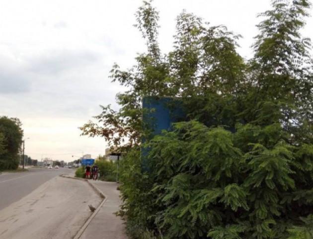 У Ковелі дорожній вказівник повністю заріс деревами