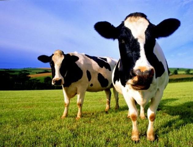 До кінця року волинські фермери можуть отримати 50 мільйонів гривень