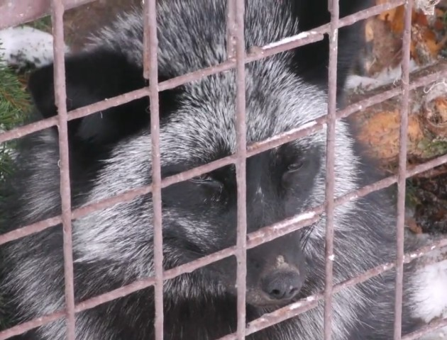 У міськраді погодили програму розвитку Луцького зоопарку. ВІДЕО
