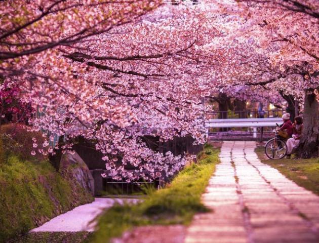 Де у Луцьку буде сад із сакурами. ФОТО