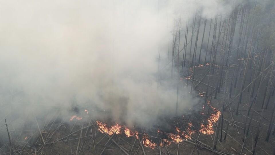 «Дуже допоміг дощ». Пожежу в Чорнобилі вдалося погасити