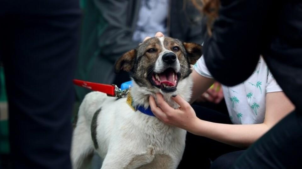 Парфуми для собак та співбесіди для людей: як у Луцьку минув фестиваль «Мокрі носики»