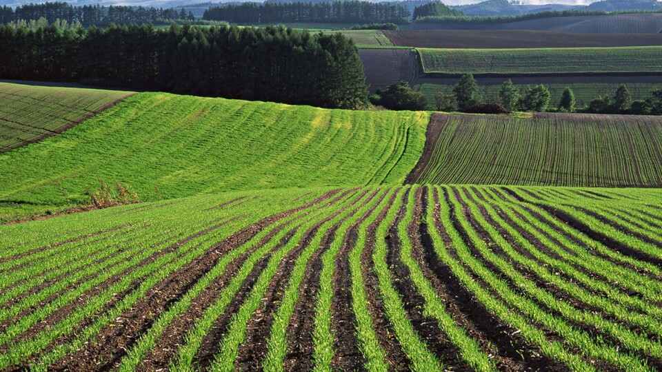 Продаж сільськогосподарської землі в Україні можуть дозволити вже до кінця року