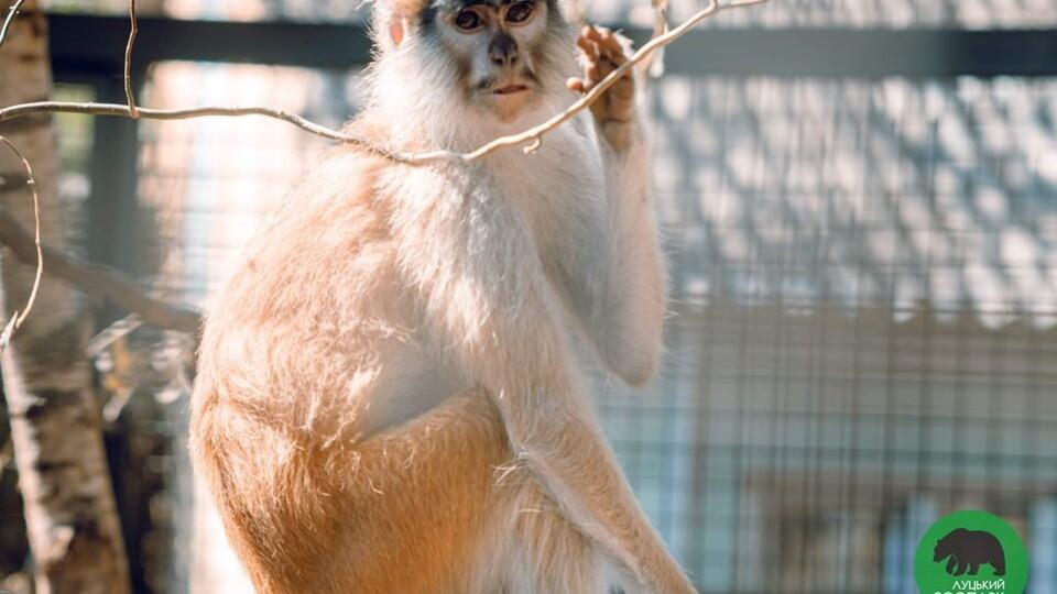 Луцький зоопарк переходить на «зимовий» графік роботи
