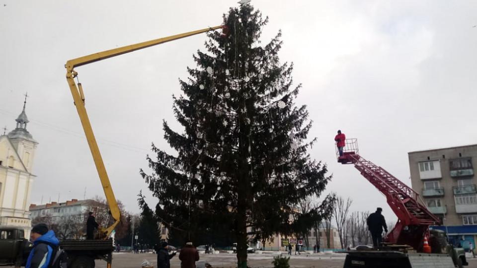 Новорічну ялинку з Володимира пустять на дрова. ФОТО