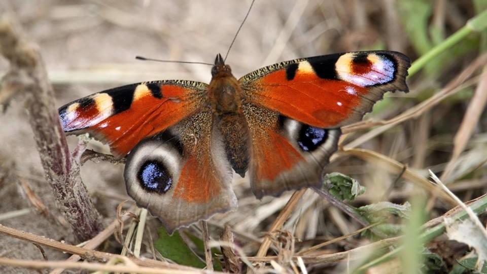 Дивовижні фото метеликів в об'єктиві волинського фотографа