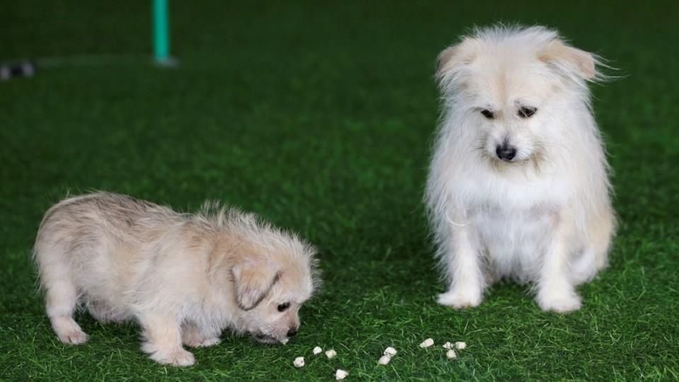 У Китаї клонують домашніх тварин