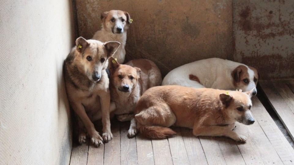 «Мокрі носики»: у Луцьку проведуть фестиваль дворових псів