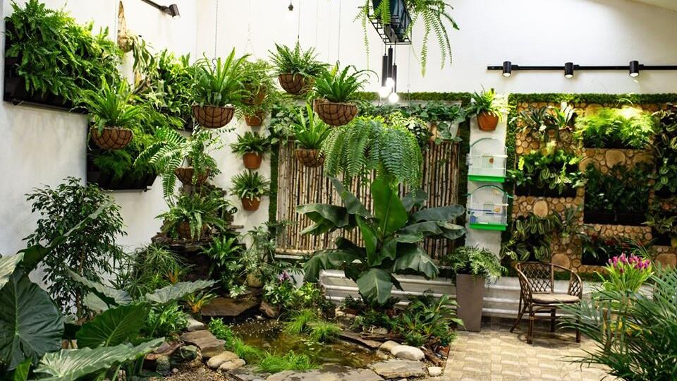 Багато зелені, водоспад і тюльпани. У школі на Волині створили зимовий сад