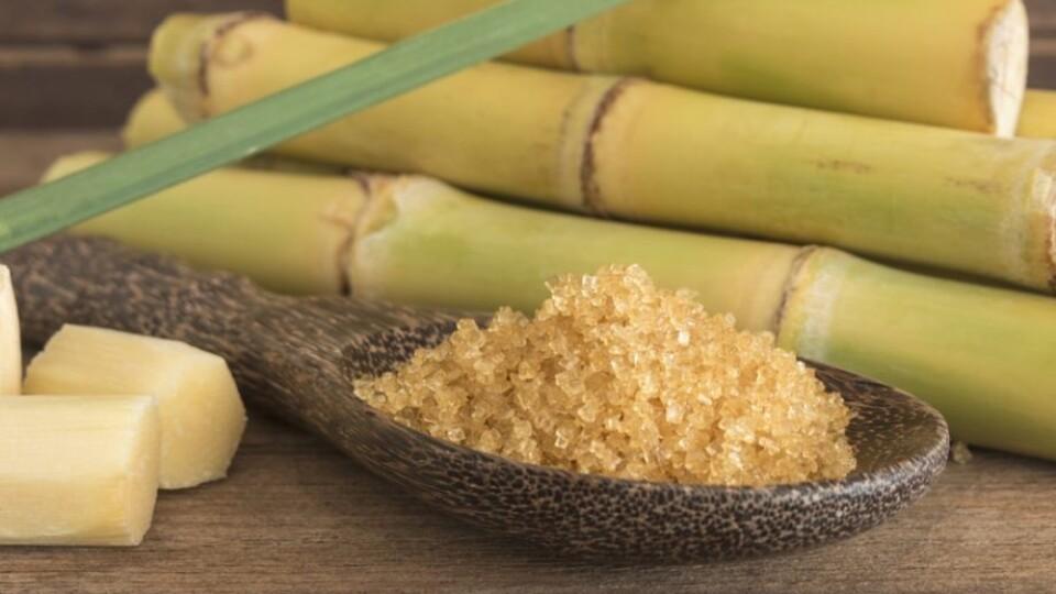 На Гнідавському цукровому заводі починають виробляти цукор із тростини