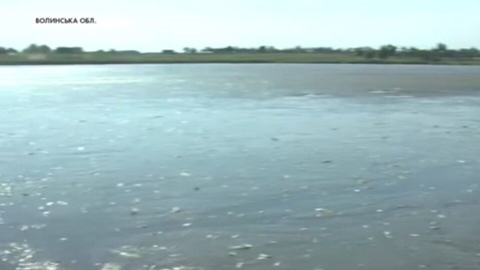 У ставку на Волині – масовий мор риби. Селяни б'ють на сполох