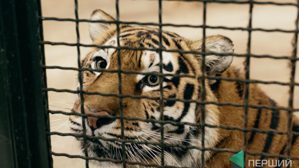 Як працюватиме Луцький зоопарк під час свят