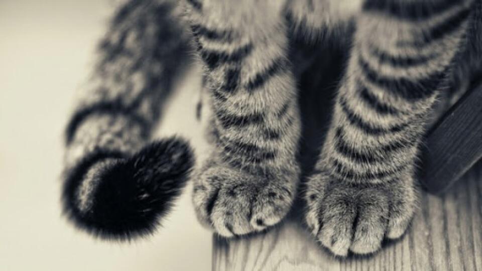 В одному з луцьких дворів закатували кошеня: шукають причетних