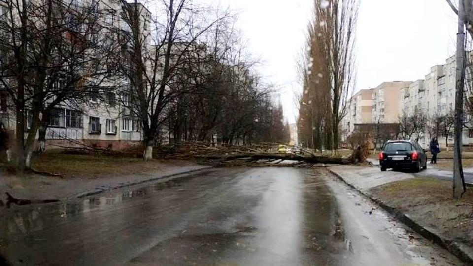 У Луцьку впало дерево і перегородило дорогу. ФОТО