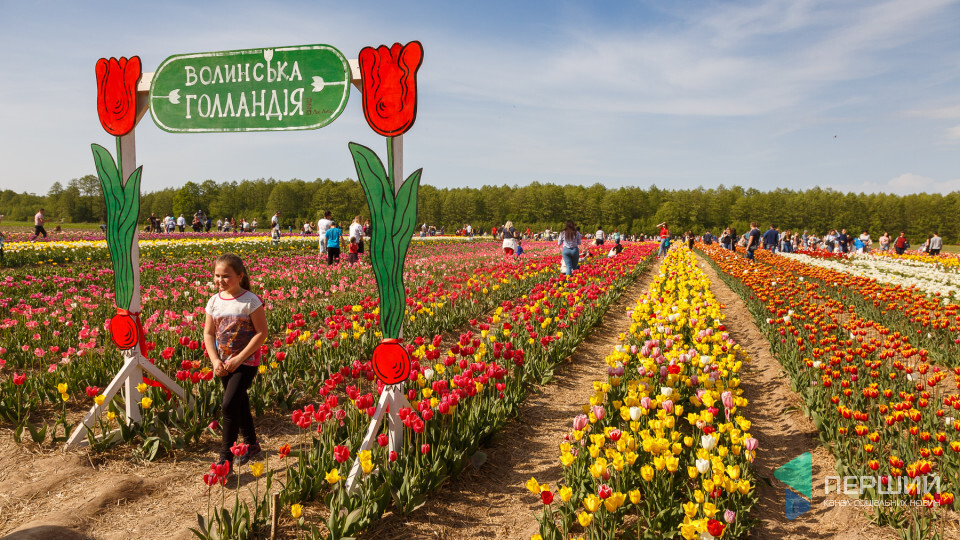 Завтра на Волині стартує тюльпановий фестиваль