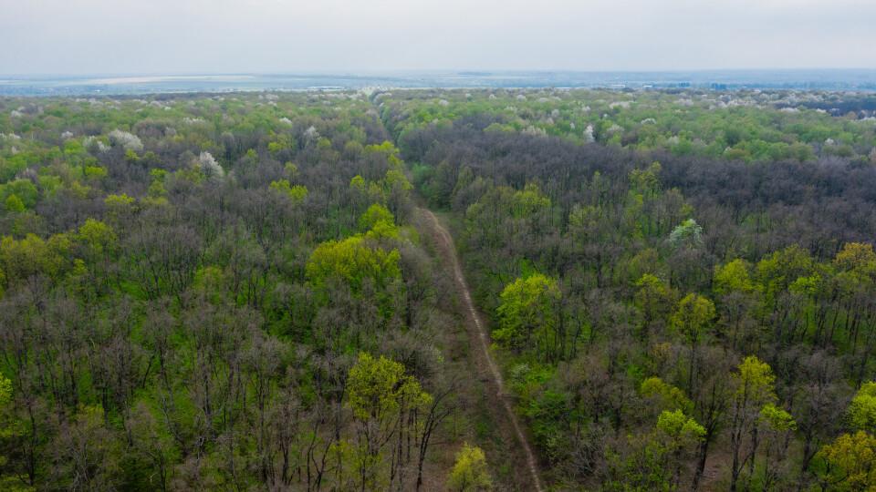 На Волині починають проєкт компенсації лісу. Хто і де