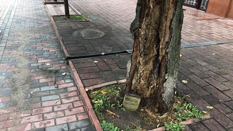 На Лесі Українки зріжуть «підозріле» дерево