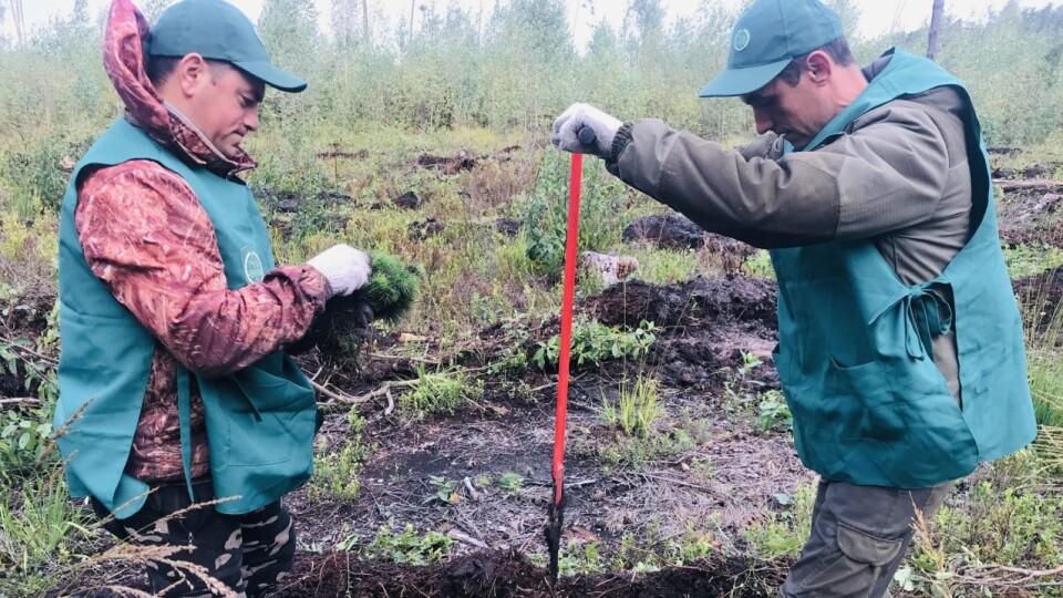 «Зелена країна»: на Волині минулого тижня висадили більш як мільйон дерев