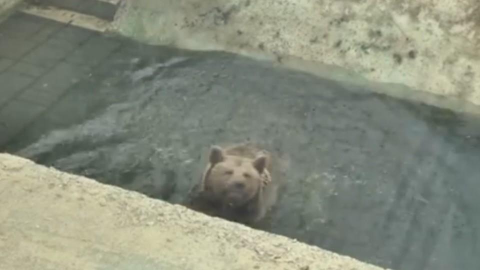 У Луцькому зоопарку після зимової сплячки прокинулися ведмеді. ВІДЕО