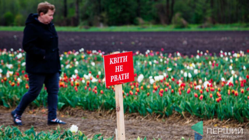 На фестивалі тюльпанів впіймали сім'ю, яка нищила квіти