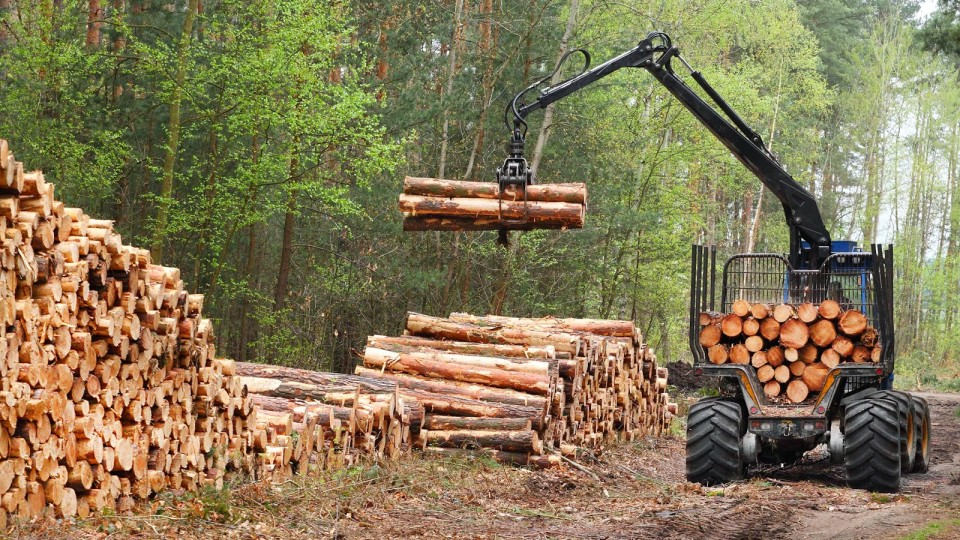 До кого звернутися волинянам, аби «виписати» собі дрова
