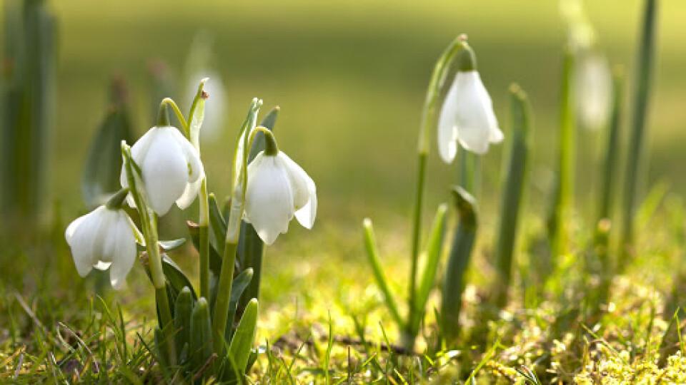 Якою буде погода на Волині у квітні і травні. Прогноз від народного синоптика