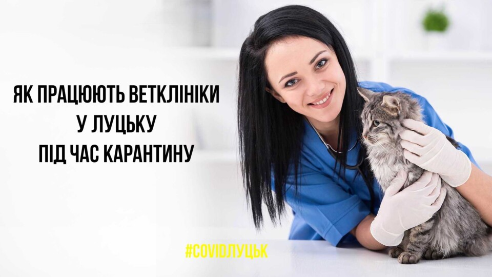 Які ветеринарні клініки працюють у Луцьку під час карантину. Список