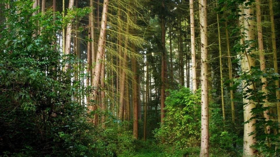 На Волині до лісу додадуть 180 гектарів