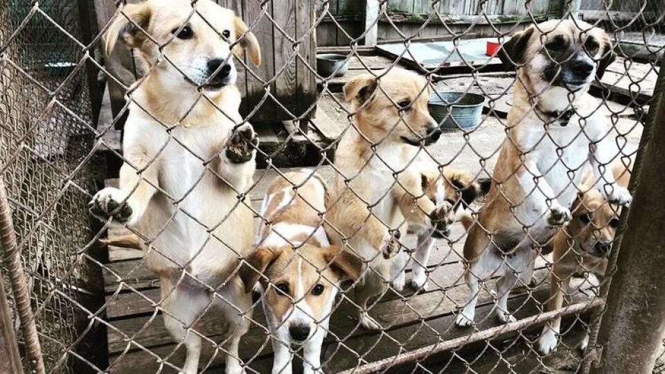 Мережа магазинів EVA відмовилася від подарунків партнерам і допомогла 7 притулкам для тварин