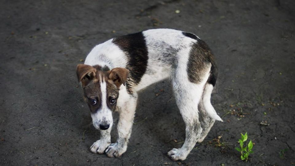 Безпритульних собак з різних міст знаходять у Луцьку. ВІДЕО